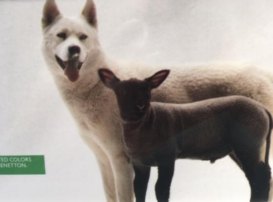 BE KADog / Sheep