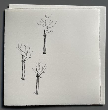 IKTU010Jungbäume/1
