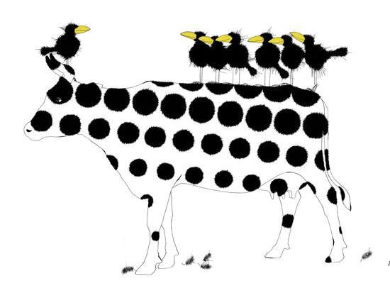 CowbirdsIIIKD676
