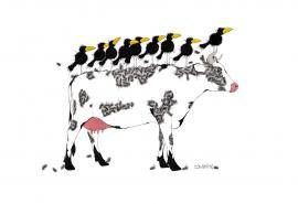 Cowbirds II